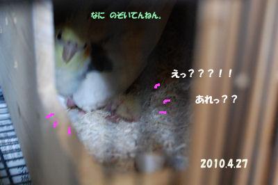 20100427wakahina.jpg