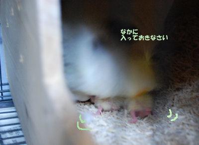 20100427wakahina2.jpg