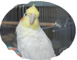 モモ2010-11sai
