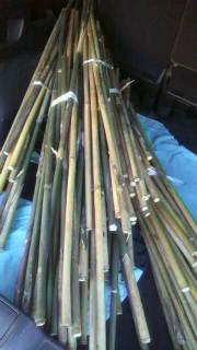 良質の女竹が沢山取れました