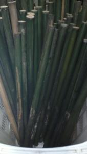 煮沸(油抜き)前の竹はとても青々してます。