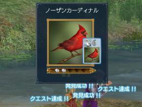 赤い鳥ヽ(´▽`)ノ♪
