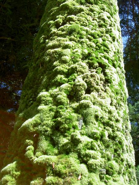 蘚苔類がびっしりと付着