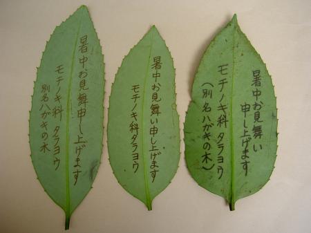タラヨウの葉に字を書く