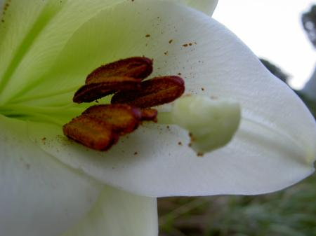 花粉の色が濃い