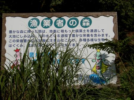 「魚つき林」を植樹したと謳う立派な看板
