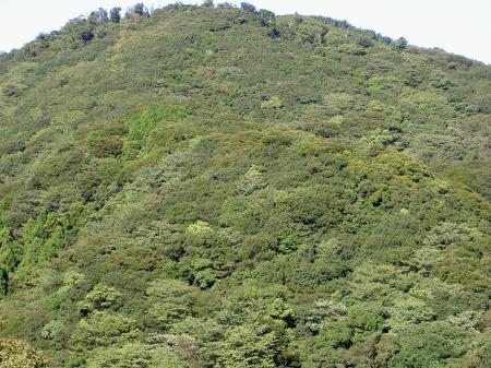 豊かな森林に覆われた山