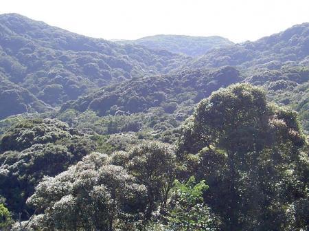 鬱蒼としげる照葉樹林