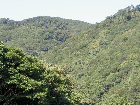 山頂付近のものは樹齢が古い