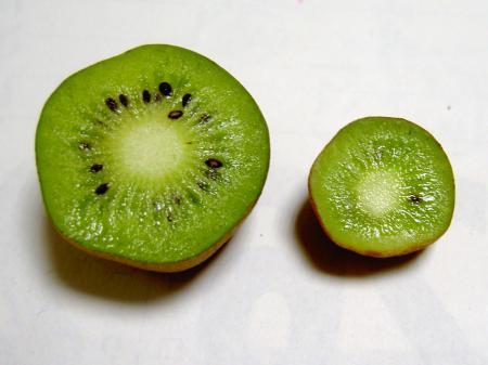 シマサルナシの果実を横切りした