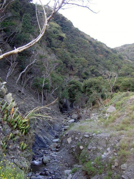 シマサルナシの自生する谷