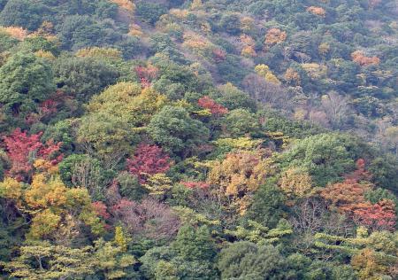 常緑樹の中に紅葉(黄葉)が点在する
