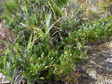海食崖の貴重植物