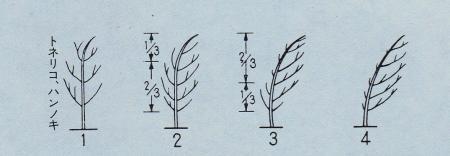 扁形の程度を数値で表す