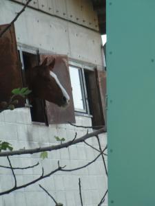 馬も見惚れる