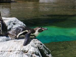 暑いのにペンギン