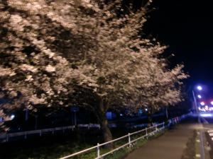 沼津の夜桜
