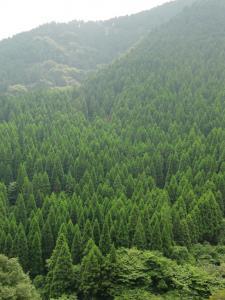 ΛΛΛΛΛの木