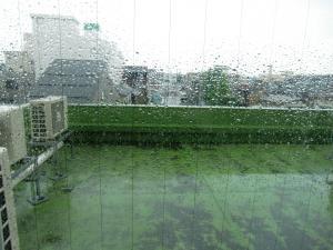 朝から雨!