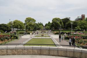 バラ庭園1