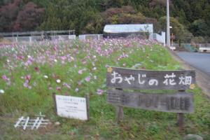オヤジの花畑