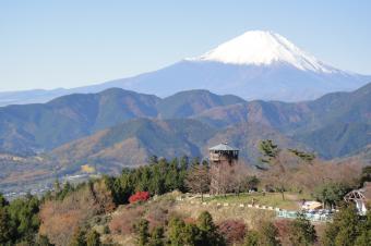 菜の花台&富士山
