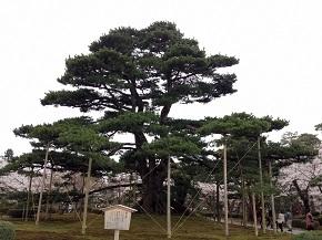 kenrokuen-3.jpg