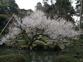 kenrokuen-6.jpg