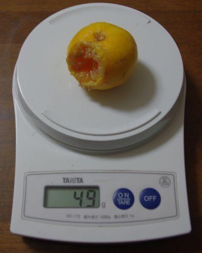 141004-伊予柑台興津早生2