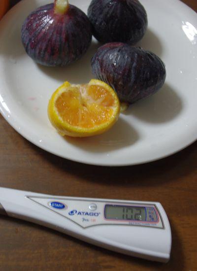 141004-伊予柑台興津早生糖度