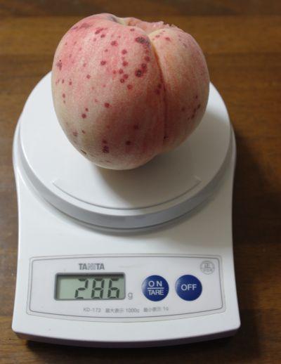 141012-桃水3