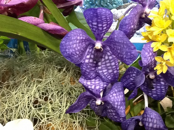 Intl Orchid Festival Feb20th 2013x9