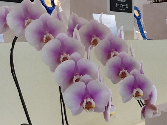 Intl Orchid Festival Feb20th 2013x8