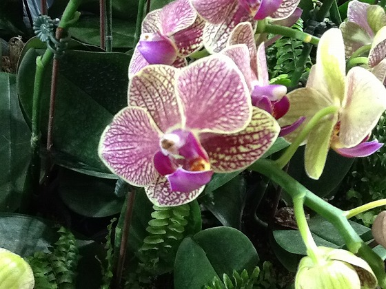 Intl Orchid Festival Feb20th 2013x15