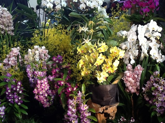 Intl Orchid Festival Feb20th 2013x18