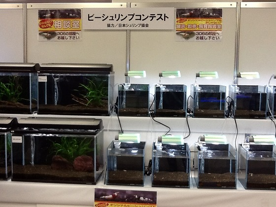Japan Ornamental Fish Fair Apr 15th 2013 x11