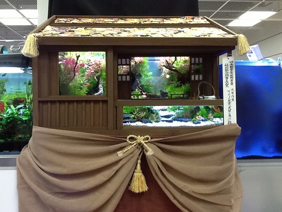 Japan Ornamental Fish Fair Apr 15th 2013 x12