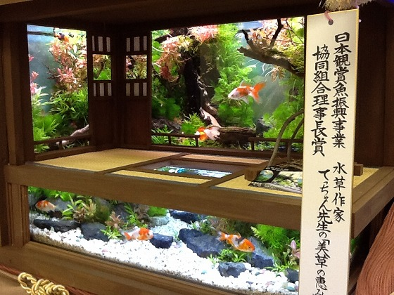 Japan Ornamental Fish Fair Apr 15th 2013 x14