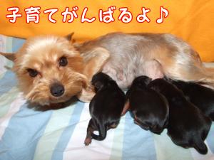 はると子犬3
