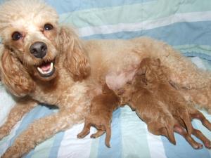 ロミ子犬授乳2