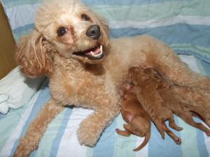 ロミ子犬授乳3