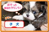 子犬ブログランキングバナー2