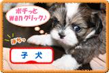 子犬ブログランキングバナー3