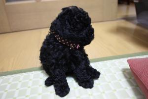 honohonoさんのプレゼント005