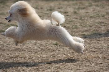 飛行犬こなつ
