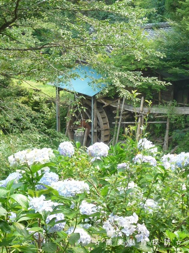1.藤枝市 手打そば 卯乃木 (窓から見える水車小屋)