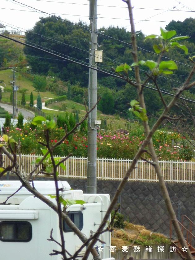 3.島田市 蕎ノ字 (テーブル席からの景色2)