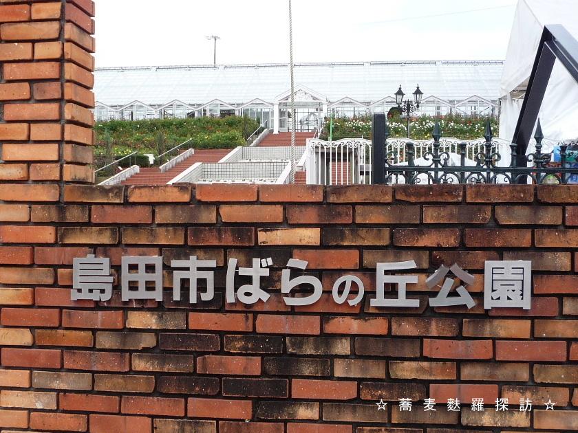 3.島田市 蕎ノ字 (島田市ばらの丘公園2)