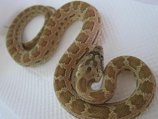 ミケヘビ①1