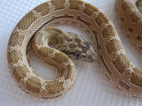 ミケヘビ①2